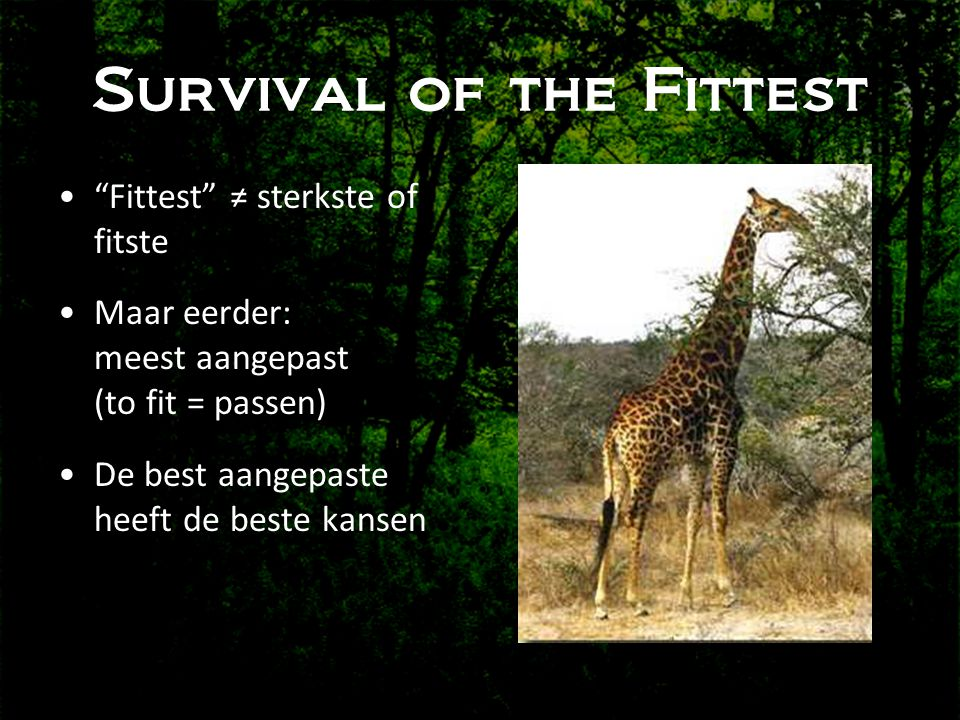 Survival of the Fittest • Fittest ≠ sterkste of fitste •Maar eerder: meest aangepast (to fit = passen) •De best aangepaste heeft de beste kansen