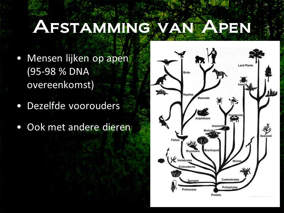 Afstamming van Apen •Mensen lijken op apen (95-98 % DNA overeenkomst) •Dezelfde voorouders •Ook met andere dieren