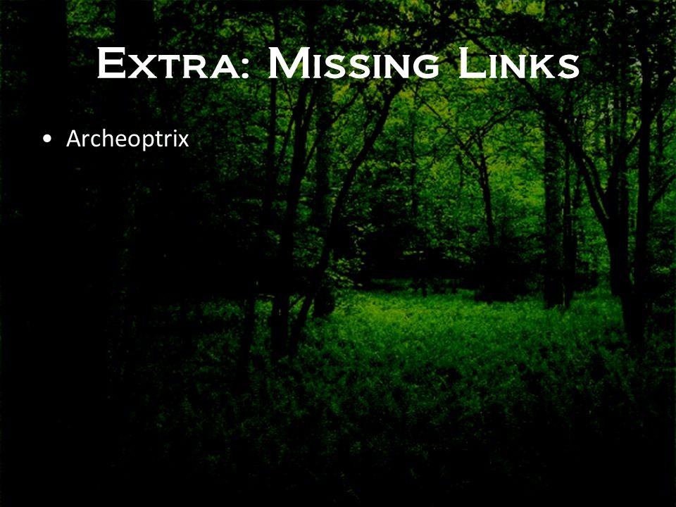 Extra: Missing Links •Archeoptrix