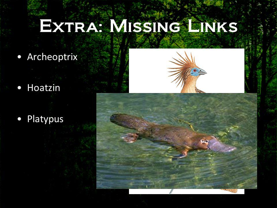 Extra: Missing Links •Archeoptrix •Hoatzin •Platypus