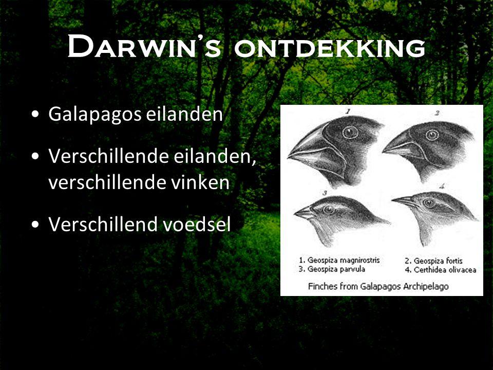 Darwin's ontdekking •Galapagos eilanden •Verschillende eilanden, verschillende vinken •Verschillend voedsel