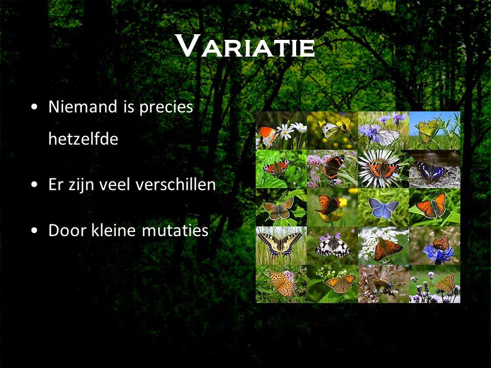 Variatie •Niemand is precies hetzelfde •Er zijn veel verschillen •Door kleine mutaties