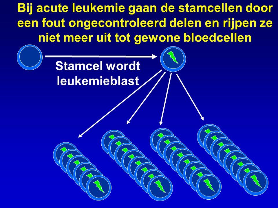Bij acute leukemie gaan de stamcellen door een fout ongecontroleerd delen en rijpen ze niet meer uit tot gewone bloedcellen Stamcel wordt leukemieblas