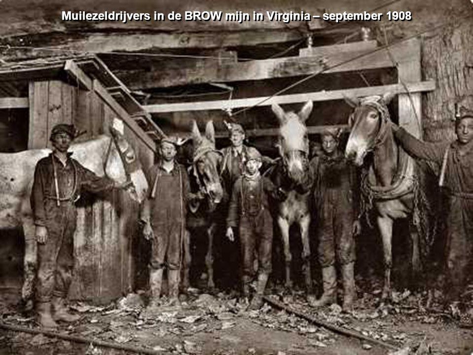 Muilezeldrijvers in de BROW mijn in Virginia – september 1908