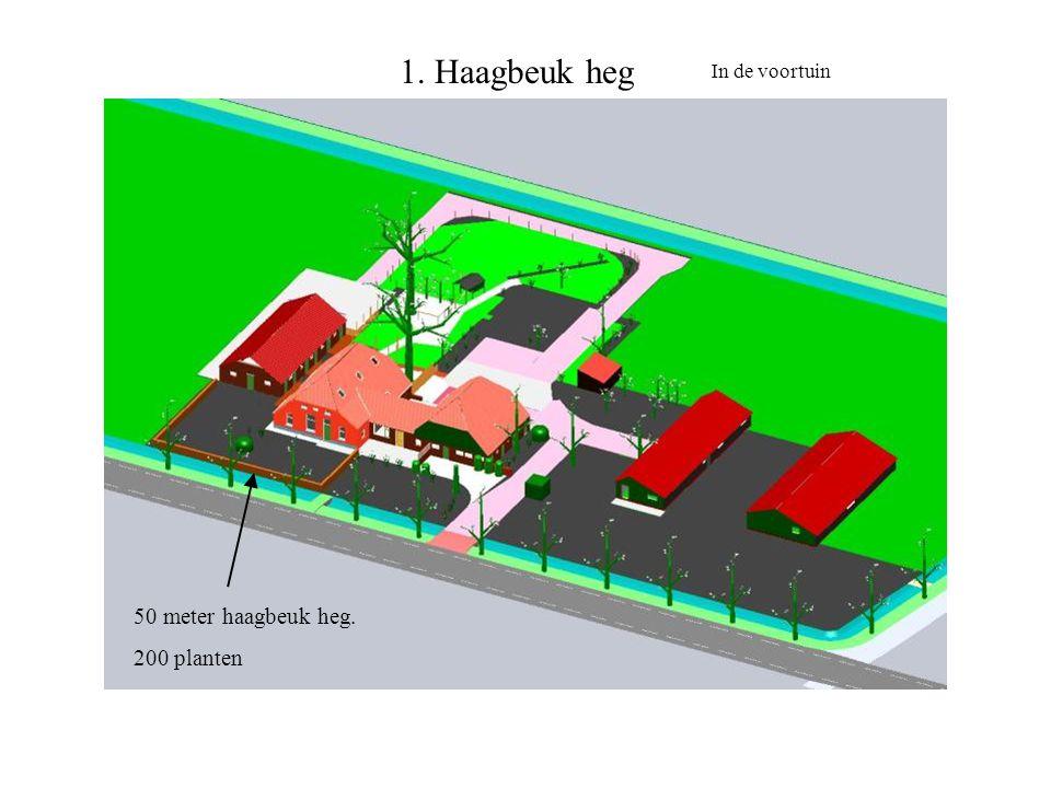 1. Haagbeuk heg 50 meter haagbeuk heg. 200 planten In de voortuin