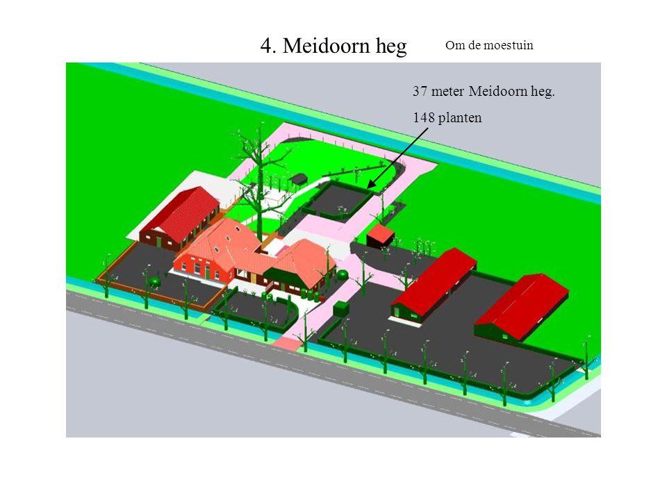 4. Meidoorn heg 37 meter Meidoorn heg. 148 planten Om de moestuin