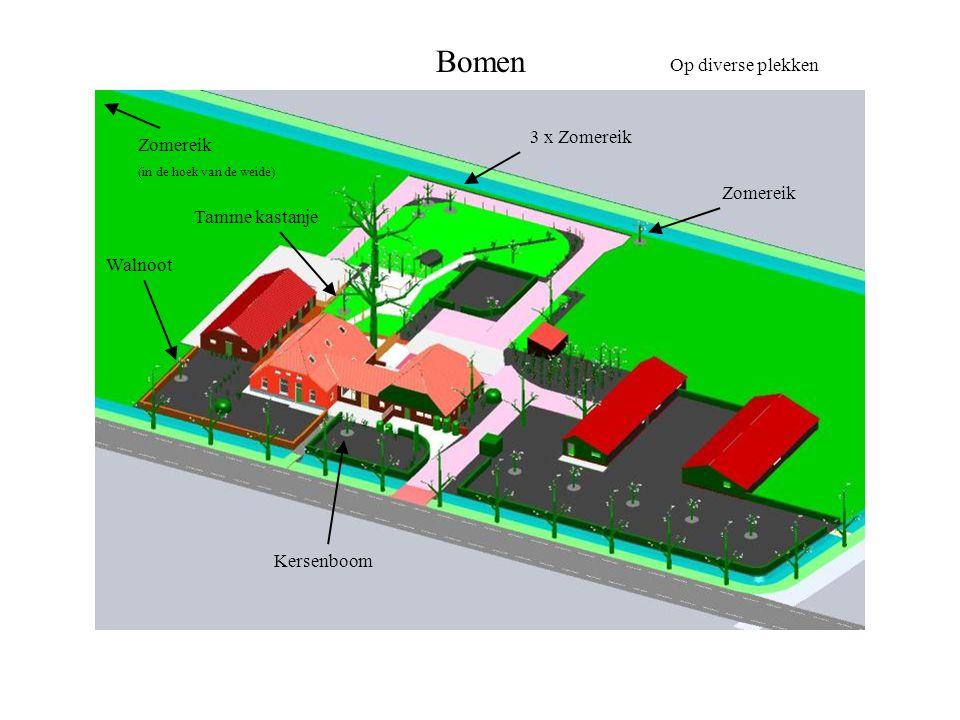 Bomen 3 x Zomereik Op diverse plekken Zomereik Walnoot Tamme kastanje Zomereik (in de hoek van de weide) Kersenboom