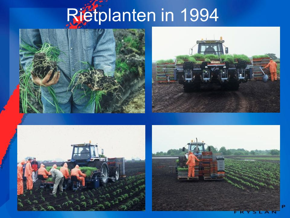Rietplanten in 1994