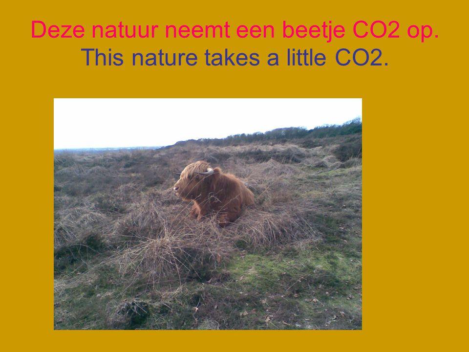 Bomen, planten en bloemen hebben CO2 nodig. Trees, plants and flowers need CO2.