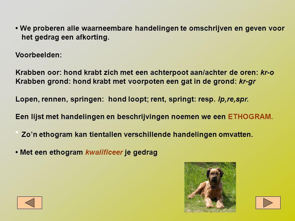 • We proberen alle waarneembare handelingen te omschrijven en geven voor het gedrag een afkorting. Voorbeelden: Krabben oor: hond krabt zich met een a