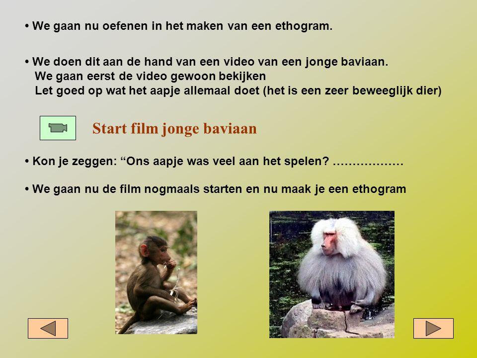 """• We gaan nu oefenen in het maken van een ethogram. Start film jonge baviaan • Kon je zeggen: """"Ons aapje was veel aan het spelen? ……………… • We doen dit"""