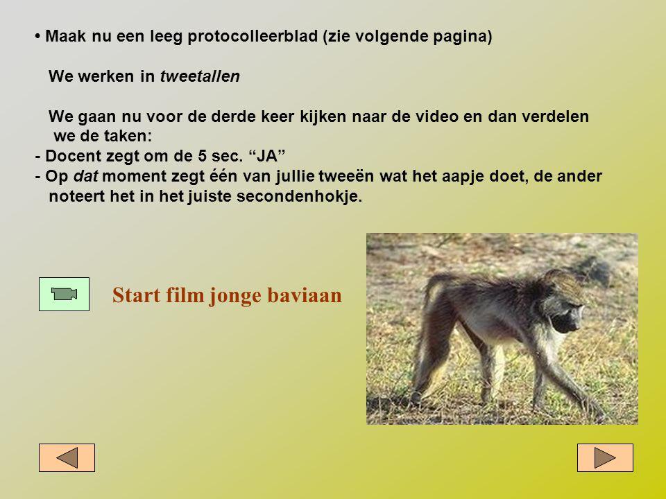 Start film jonge baviaan • Maak nu een leeg protocolleerblad (zie volgende pagina) We werken in tweetallen We gaan nu voor de derde keer kijken naar d