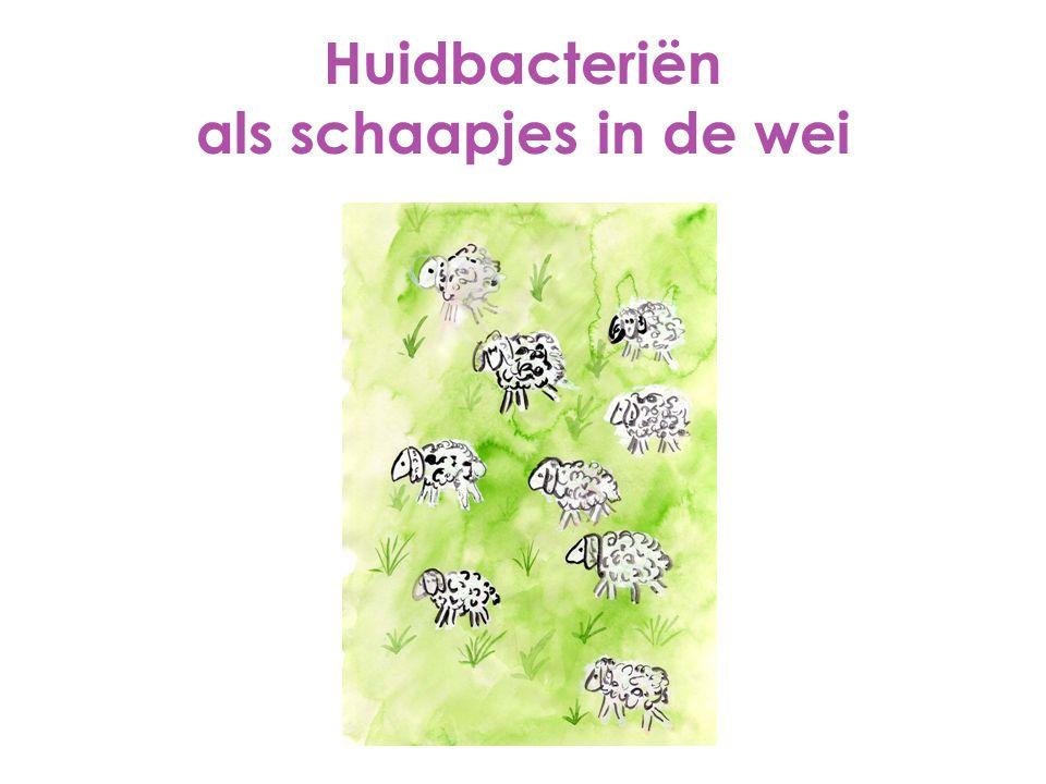 Huidbacteriën als schaapjes in de wei