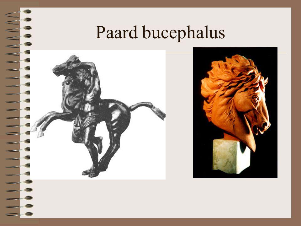 Paard bucephalus