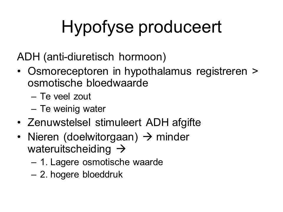 Hypofyse produceert ADH (anti-diuretisch hormoon) •Osmoreceptoren in hypothalamus registreren > osmotische bloedwaarde –Te veel zout –Te weinig water