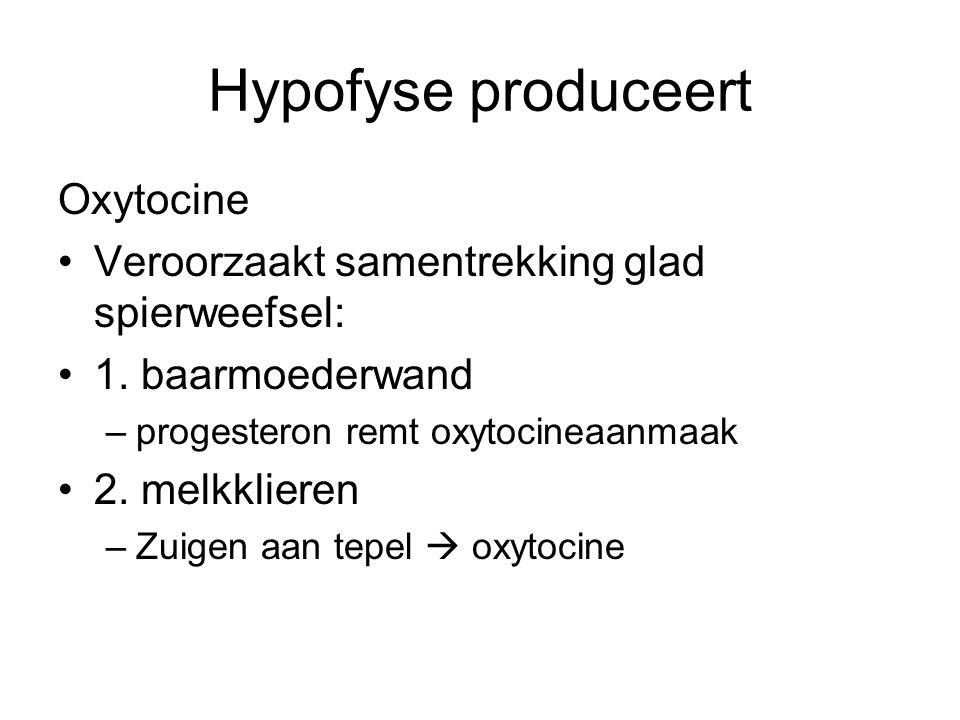 Hypofyse produceert Oxytocine •Veroorzaakt samentrekking glad spierweefsel: •1. baarmoederwand –progesteron remt oxytocineaanmaak •2. melkklieren –Zui