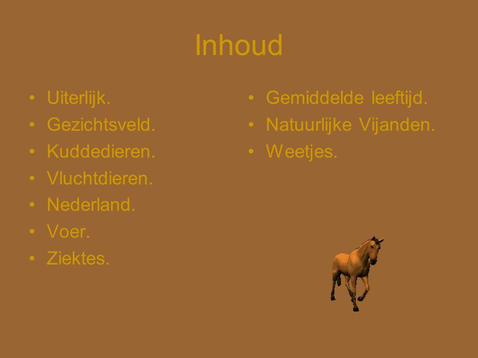 Inhoud •Uiterlijk. •Gezichtsveld. •Kuddedieren. •Vluchtdieren. •Nederland. •Voer. •Ziektes. •Gemiddelde leeftijd. •Natuurlijke Vijanden. •Weetjes.