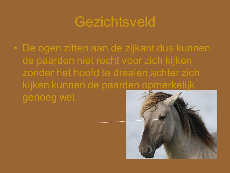 Gezichtsveld •De ogen zitten aan de zijkant dus kunnen de paarden niet recht voor zich kijken zonder het hoofd te draaien,achter zich kijken kunnen de