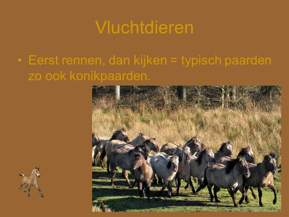 Vluchtdieren •Eerst rennen, dan kijken = typisch paarden zo ook konikpaarden.