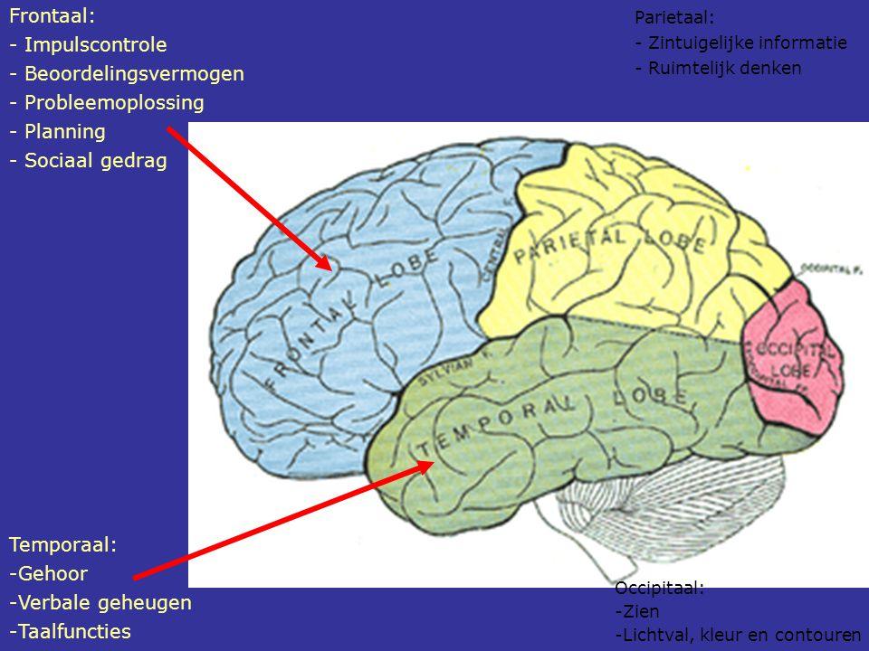 Temporaal: -Gehoor -Verbale geheugen -Taalfuncties Parietaal: - Zintuigelijke informatie - Ruimtelijk denken Occipitaal: -Zien -Lichtval, kleur en con