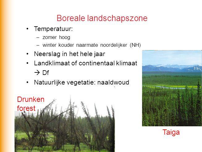 Boreale landschapszone •Temperatuur: –zomer hoog –winter kouder naarmate noordelijker (NH) •Neerslag in het hele jaar •Landklimaat of continentaal kli