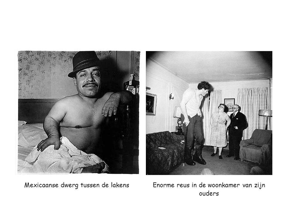 Mexicaanse dwerg tussen de lakensEnorme reus in de woonkamer van zijn ouders