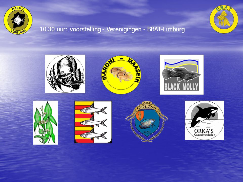 10.30 uur: voorstelling - Verenigingen - BBAT-Limburg