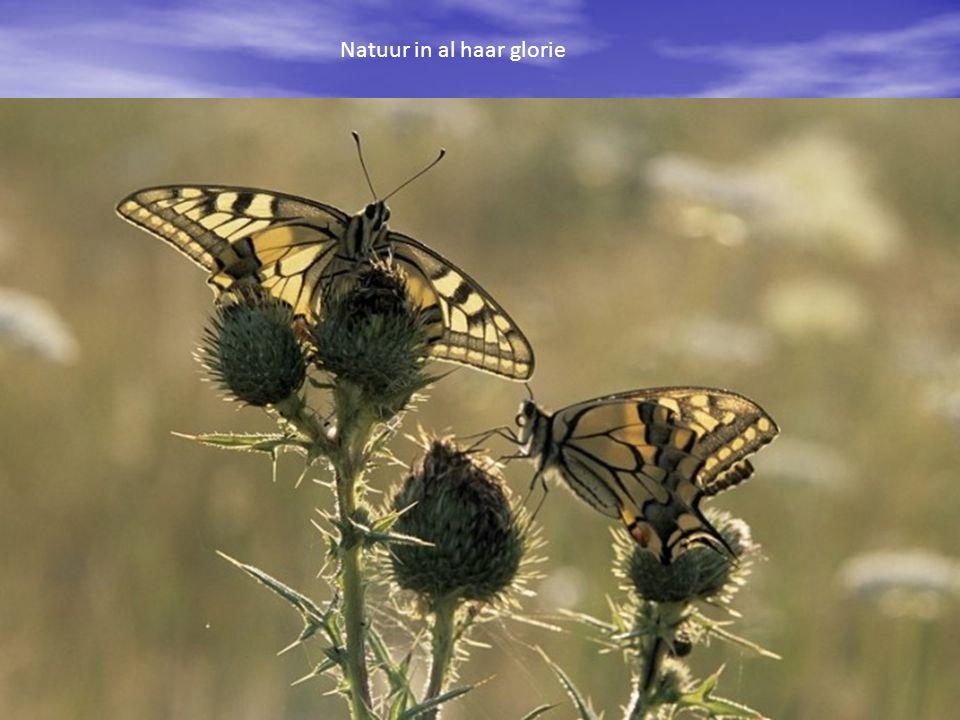 Natuur in al haar glorie