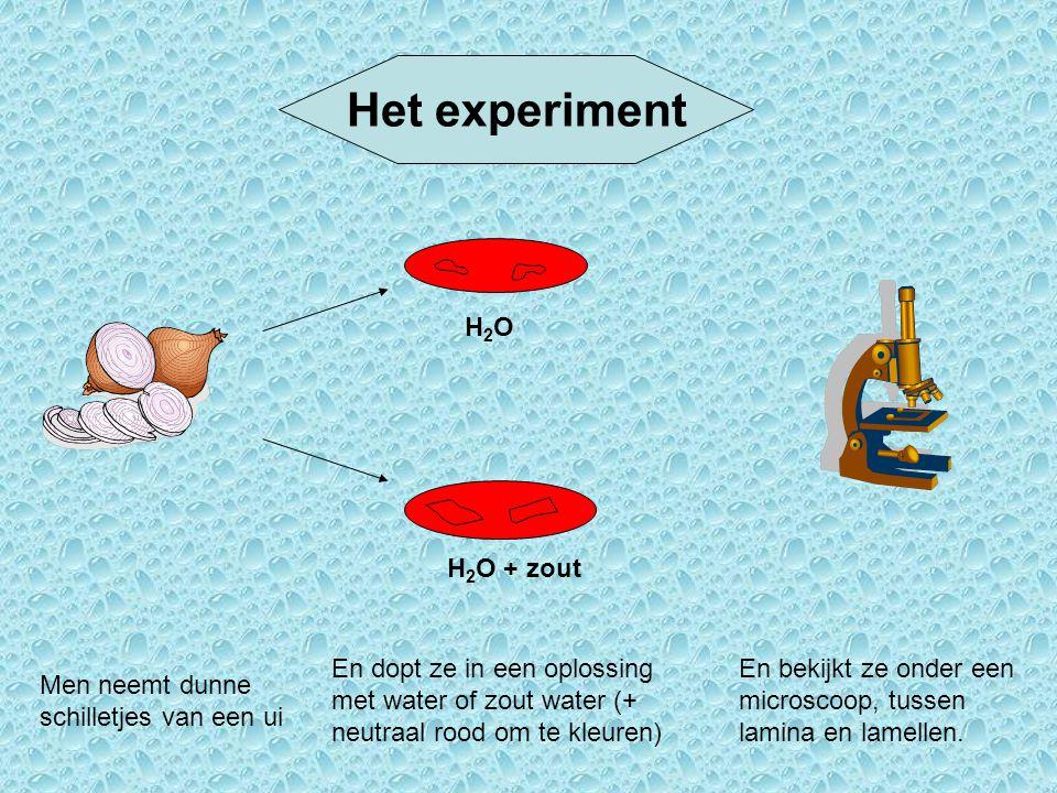 Het experiment H2OH2O H 2 O + zout Men neemt dunne schilletjes van een ui En dopt ze in een oplossing met water of zout water (+ neutraal rood om te k