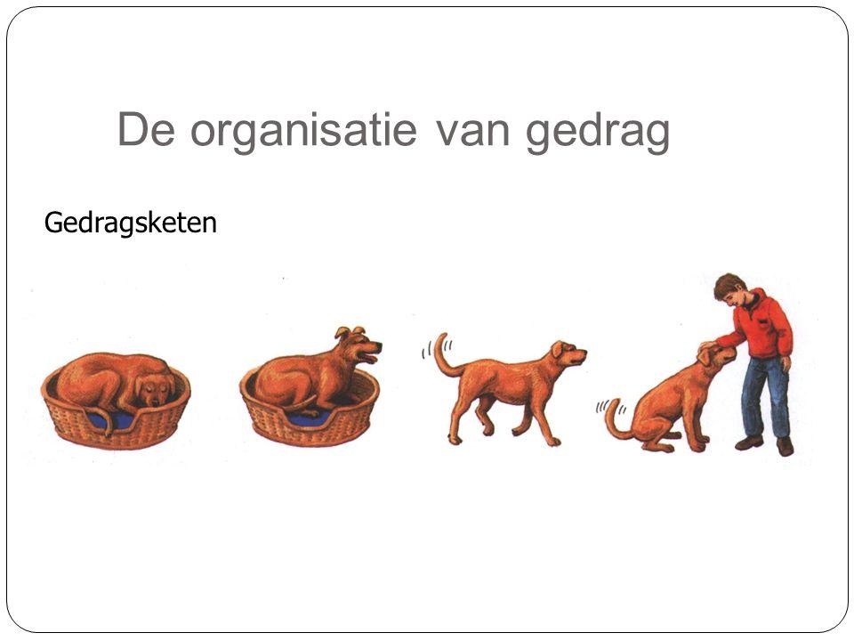 De organisatie van gedrag Gedragsketen