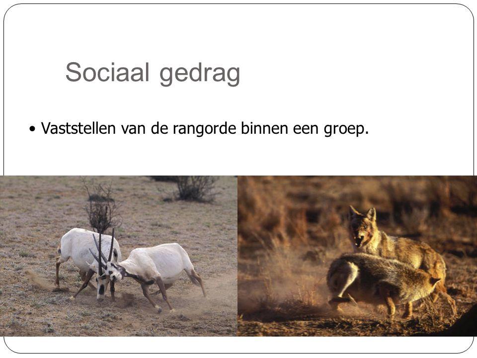 Sociaal gedrag • Vaststellen van de rangorde binnen een groep.