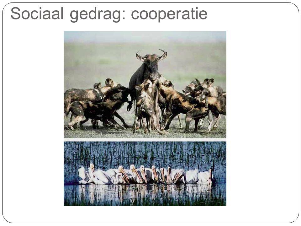 Sociaal gedrag: cooperatie