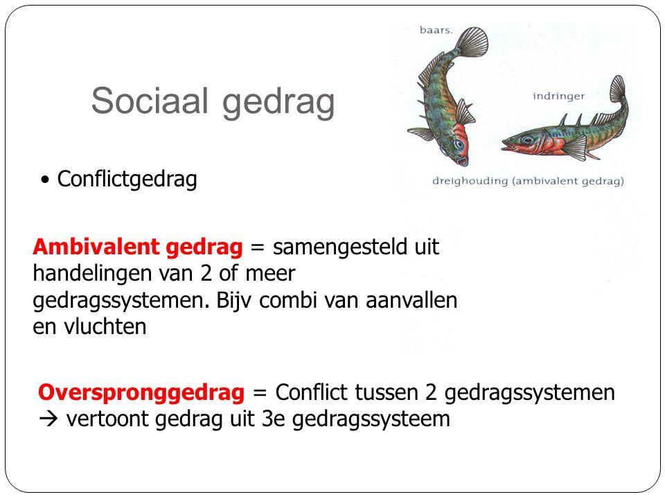 Sociaal gedrag • Conflictgedrag Overspronggedrag = Conflict tussen 2 gedragssystemen  vertoont gedrag uit 3e gedragssysteem Ambivalent gedrag = samen