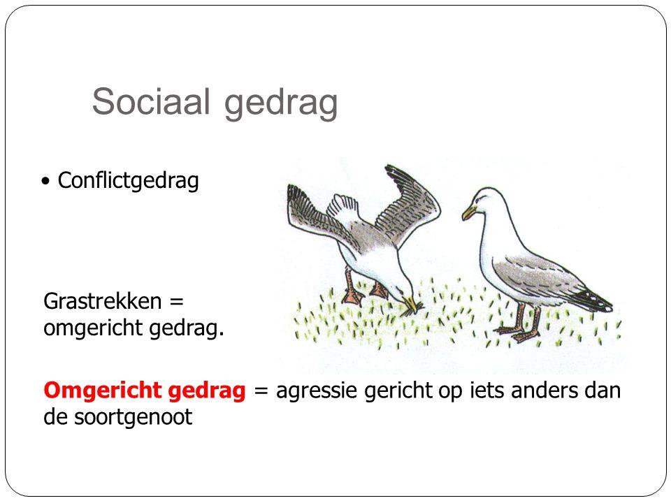 Sociaal gedrag • Conflictgedrag Grastrekken = omgericht gedrag. Omgericht gedrag = agressie gericht op iets anders dan de soortgenoot