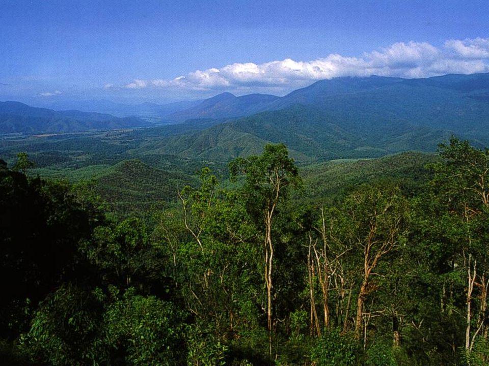  Beeld van subtropisch woud