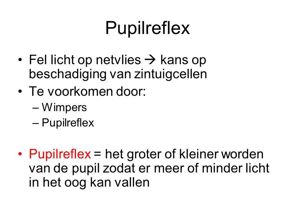Werking pupilreflex