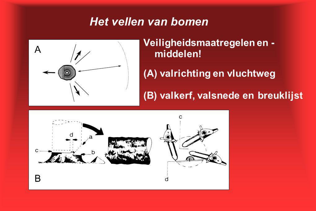 Het vellen van bomen Veiligheidsmaatregelen en - middelen! (A) valrichting en vluchtweg (B) valkerf, valsnede en breuklijst A B