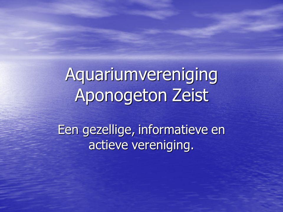Aquariumvereniging Aponogeton Zeist Een gezellige, informatieve en actieve vereniging.