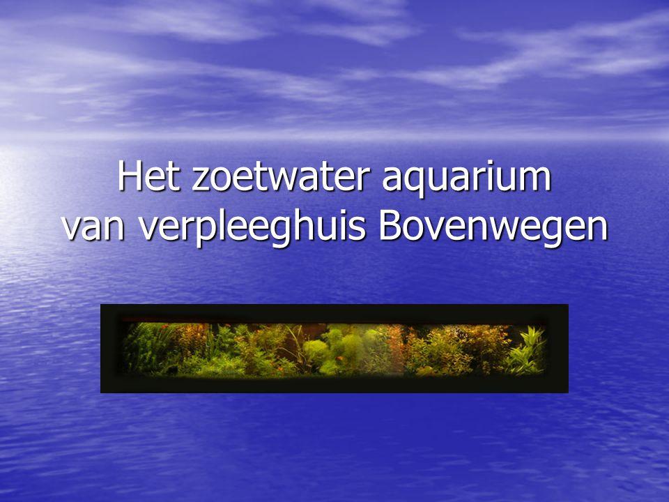 Het zoetwater aquarium van verpleeghuis Bovenwegen