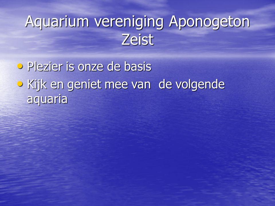 Aquarium vereniging Aponogeton Zeist • Plezier is onze de basis • Kijk en geniet mee van de volgende aquaria