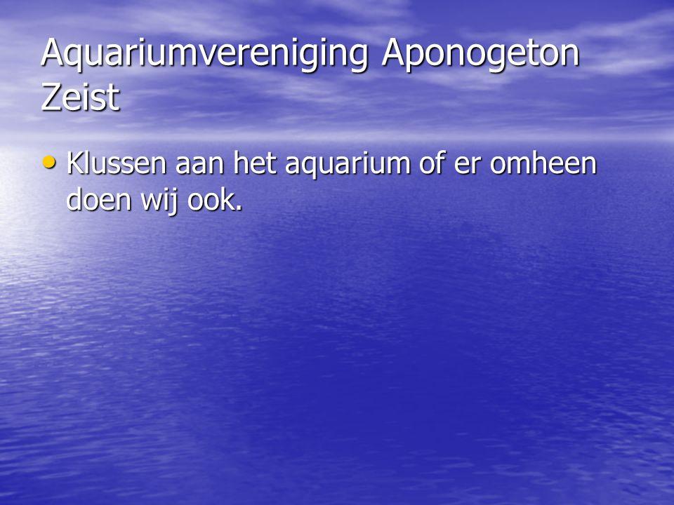 Aquariumvereniging Aponogeton Zeist • Klussen aan het aquarium of er omheen doen wij ook.