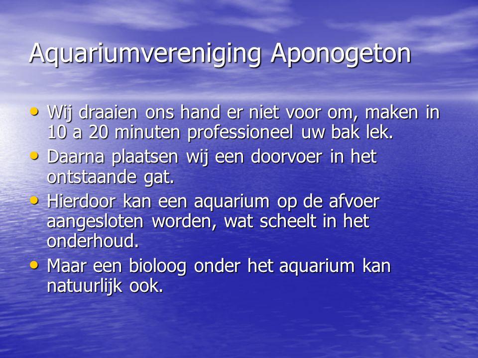 Aquariumvereniging Aponogeton • Wij draaien ons hand er niet voor om, maken in 10 a 20 minuten professioneel uw bak lek. • Daarna plaatsen wij een doo