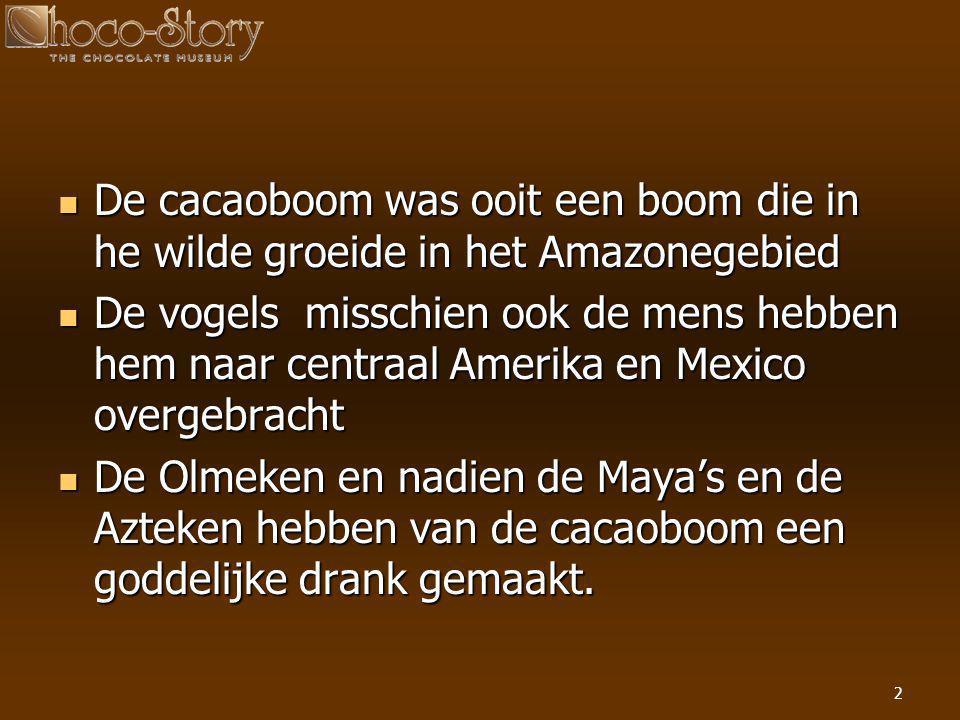 2  De cacaoboom was ooit een boom die in he wilde groeide in het Amazonegebied  De vogels misschien ook de mens hebben hem naar centraal Amerika en
