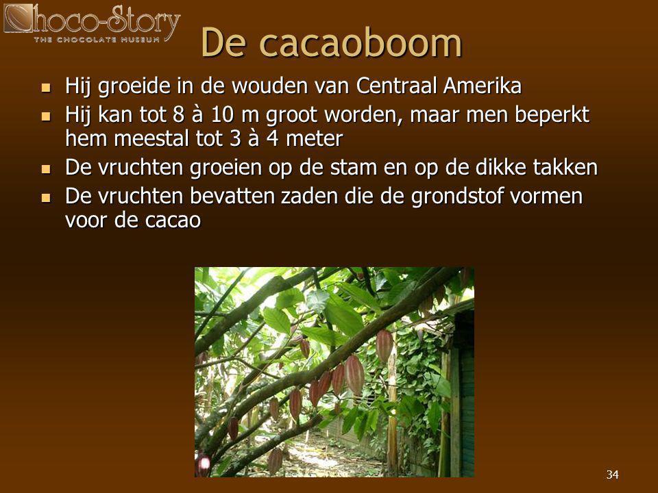 34 De cacaoboom  Hij groeide in de wouden van Centraal Amerika  Hij kan tot 8 à 10 m groot worden, maar men beperkt hem meestal tot 3 à 4 meter  De