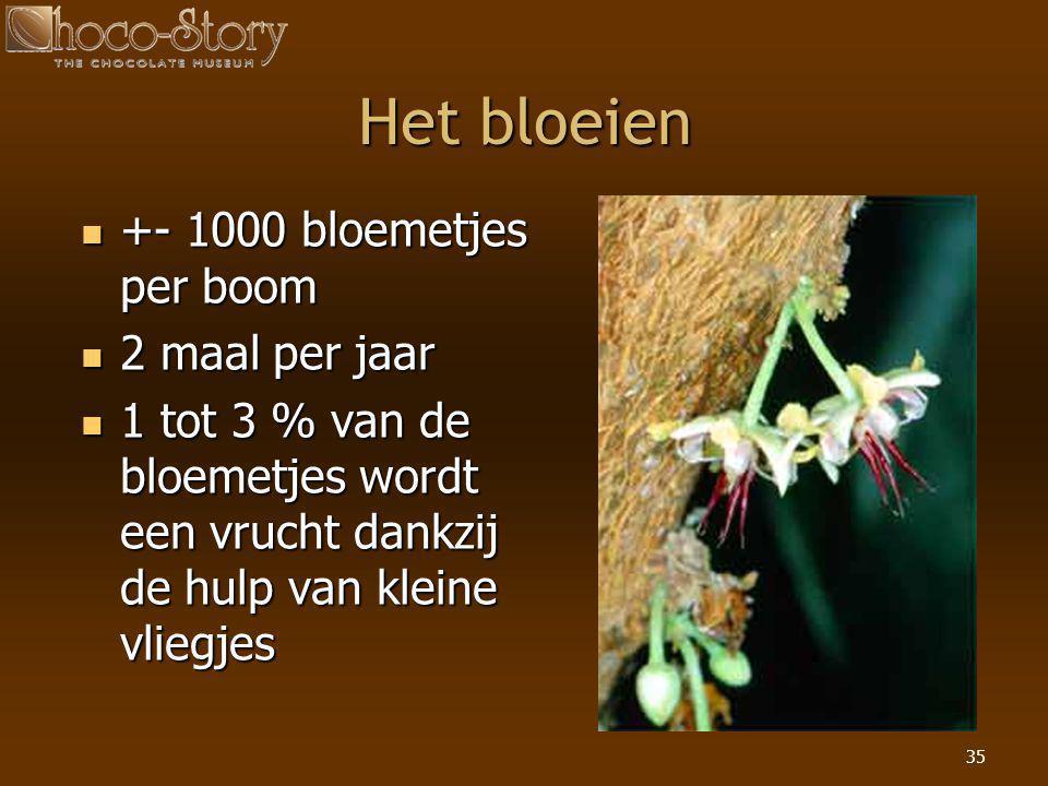 35 Het bloeien  +- 1000 bloemetjes per boom  2 maal per jaar  1 tot 3 % van de bloemetjes wordt een vrucht dankzij de hulp van kleine vliegjes
