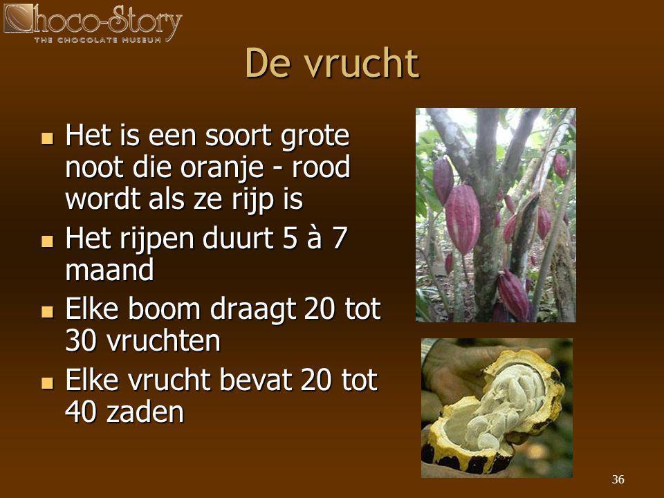 36 De vrucht  Het is een soort grote noot die oranje - rood wordt als ze rijp is  Het rijpen duurt 5 à 7 maand  Elke boom draagt 20 tot 30 vruchten