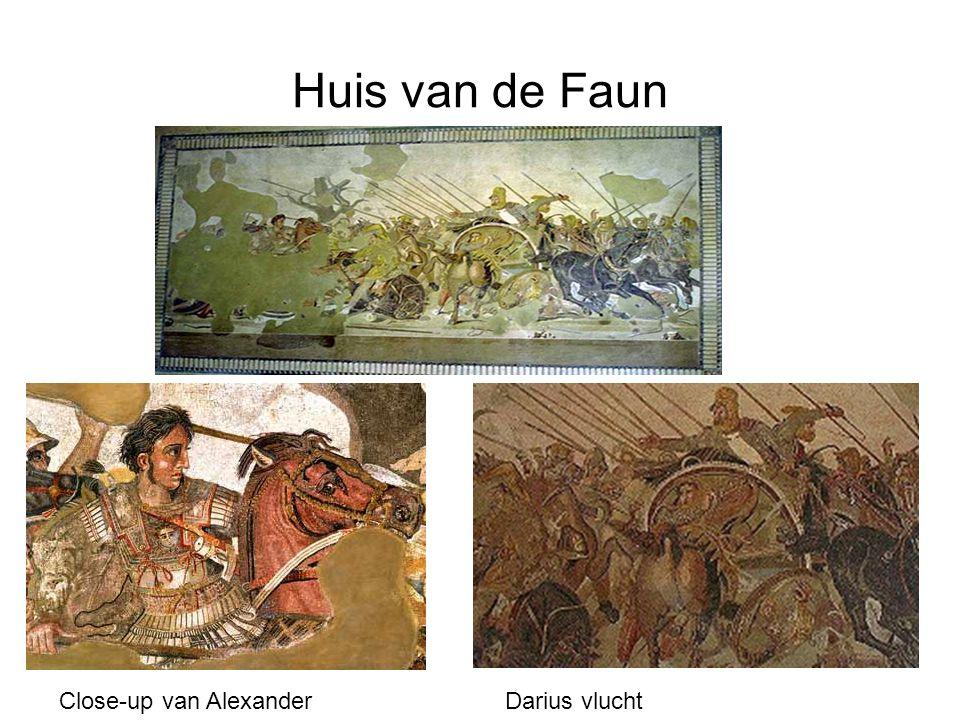 Huis van de Faun Close-up van AlexanderDarius vlucht