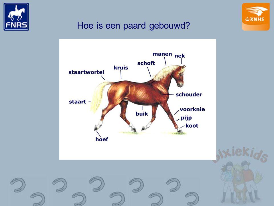 Hoe is een paard gebouwd?