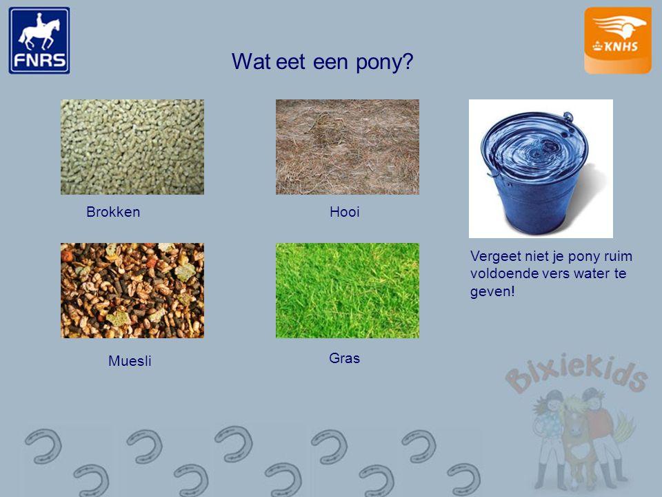 Wat eet een pony? Brokken Muesli Hooi Gras Vergeet niet je pony ruim voldoende vers water te geven!