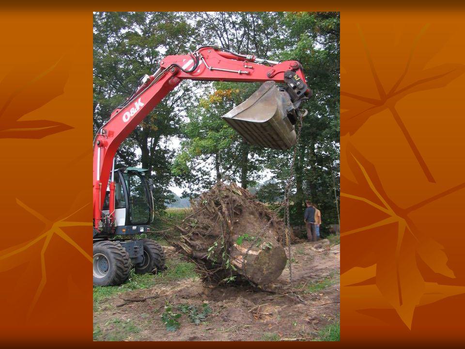 De boomstronken worden naar een locatie vervoerd.